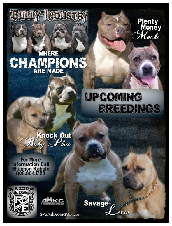 Bully Industry - Upcoming Breedings - Shannon Kahale
